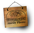 BROWNTHWAITE HARDY PLANTS LIMITED